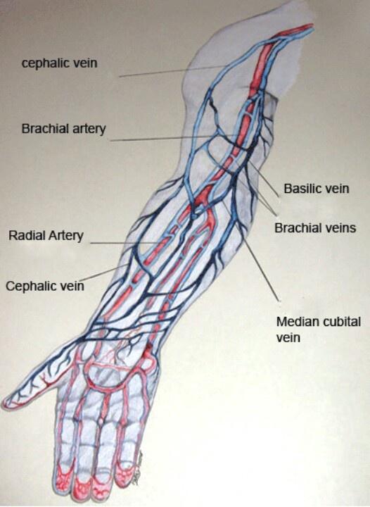 Similiar Arm Veins For IV Keywords