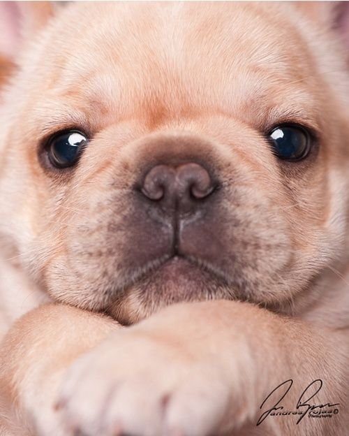 puppy   face  Anyone know the photographer of this amazing   pix? Would love to see more of what they do:)