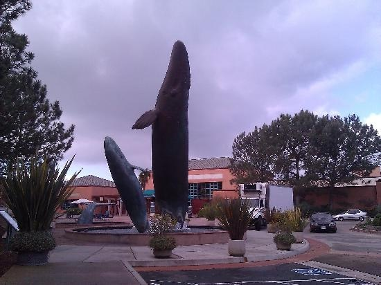 Go To Scripps Aquarium San Diego Staycation Pinterest