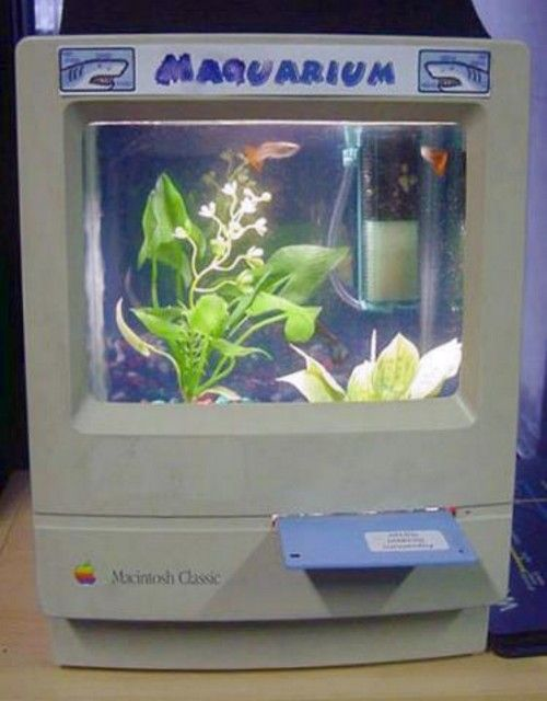 This is a cute fish tank frogs and fish pinterest for Cute fish tanks