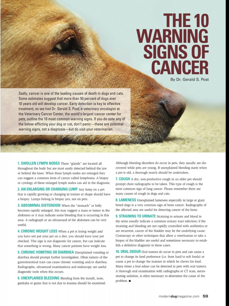 Signs Of Canine Cancer  Canine Cancer  Pinterest. What Is A Roll Over Ira Email Marketing Suite. Car Insurance Monthly Calculator. Org Openqa Selenium Webdriver. Latoya Jackson Before Plastic Surgery. Where Can I Get A Surety Bond. Best Payday Loan Company Last Miniute Cruises. Liability Work Insurance Best Advertising Apps. Recommendation Engine Algorithm