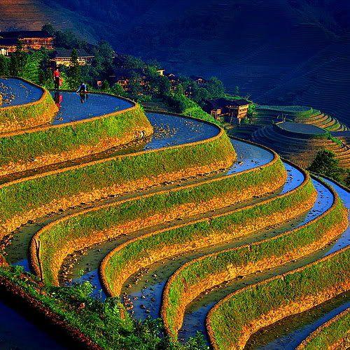"""china.  rice paddy """"fields""""."""