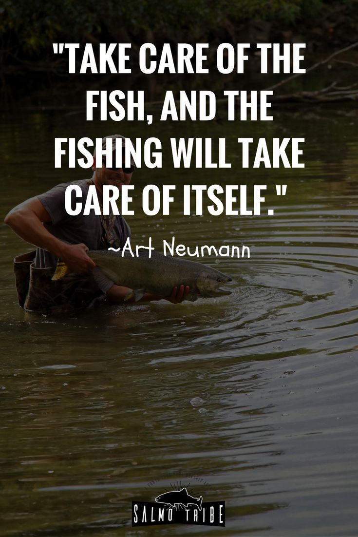 Funny fish quotes