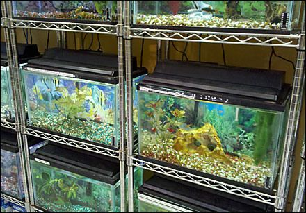 Metro Shelf Fish Tank Racks Wet Dream Pinterest