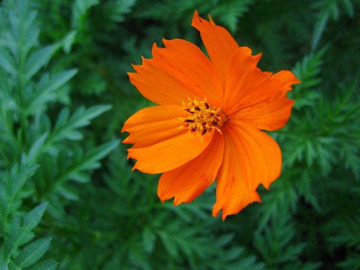 orange flowers for valentine's day