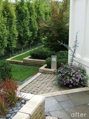 Privacy Trees For Backyard NM House Ideas Pinterest