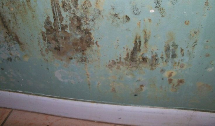 mold damage in a bedroom wall mold damage pinterest