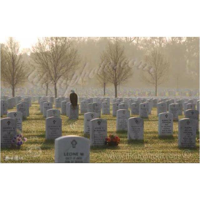The Fallen by T. Jefferson Parker (2011, CD, Unabridged)