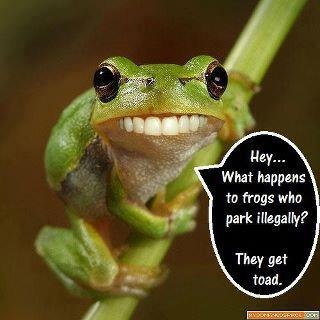 grenouille quotes