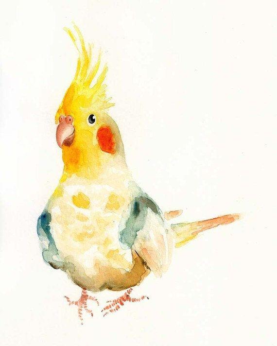 попугайчик. акварель
