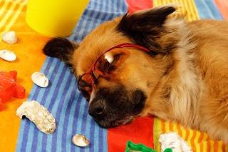 Pornostar valentina blue doggy