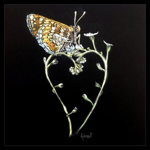 Butterfly scratchboard - photo#22