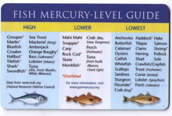 fish mercury guide shrimp crab lobster scallops