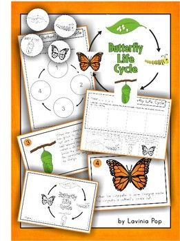 Butterfly Life Cycle - a mini cut and paste unit