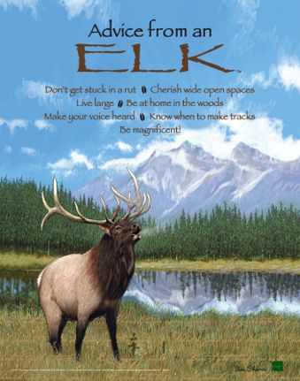 Elk Quotes And Sayings Quotesgram