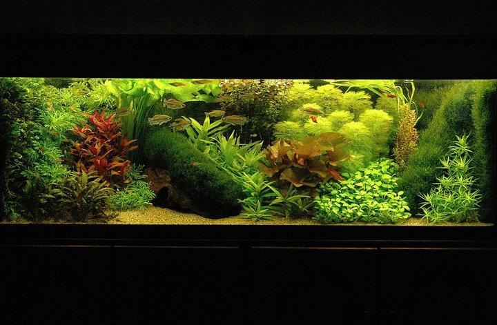 Another dutch tank Planted Aquariums Pinterest