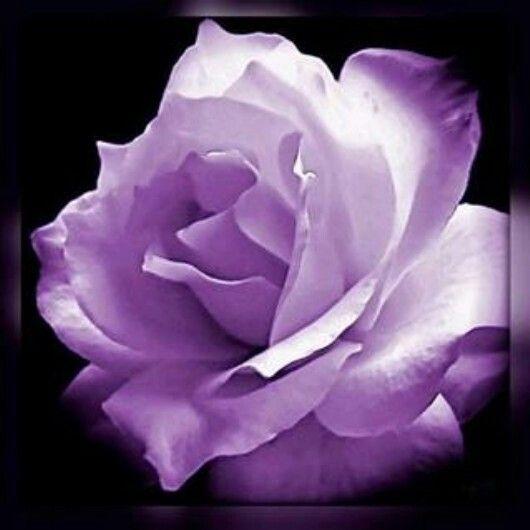 my favorite color purple my favorite color purple pinterest. Black Bedroom Furniture Sets. Home Design Ideas