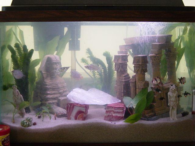 Pin by sherif fahmy on aquarium fishes pinterest for Aquarium log decoration