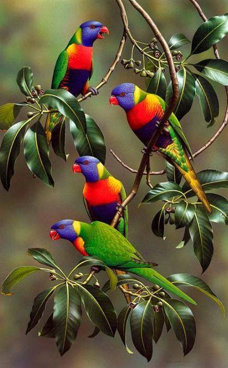 Rainbow Lorikeets  #parrots