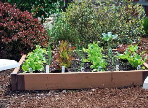 Raised Herb Garden Design Photograph Raised Herb Garden Pl