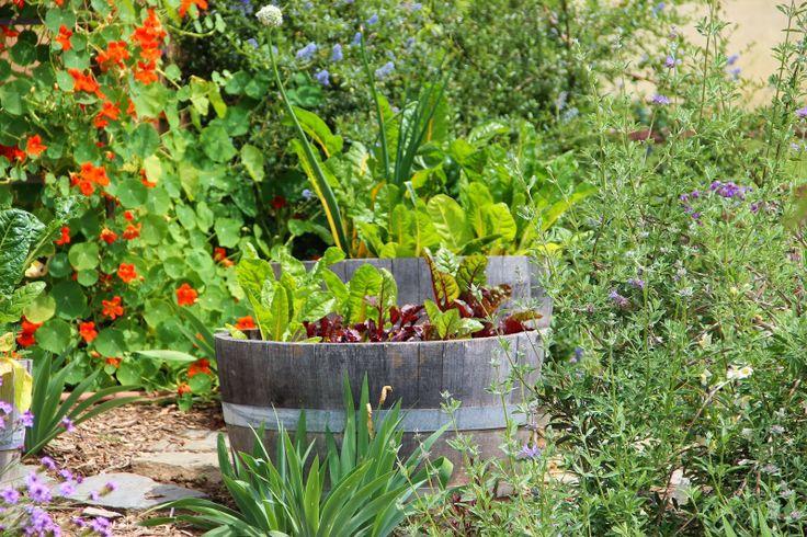 lettuce garden | vegetable and fruit gardening | Pinterest