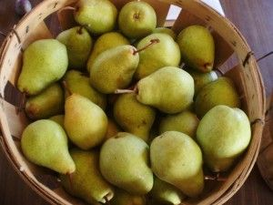 For pear fruit leather, we simply core our pears (peels and all) and ...