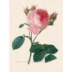 Cabbage rose home decor the cabbage rose pinterest for Rose home decorations