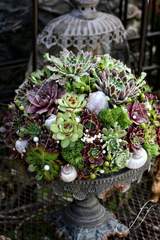 lovely succulent container garden Flowers Gardens