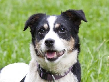 Tierheim mit hunden gassi gehen