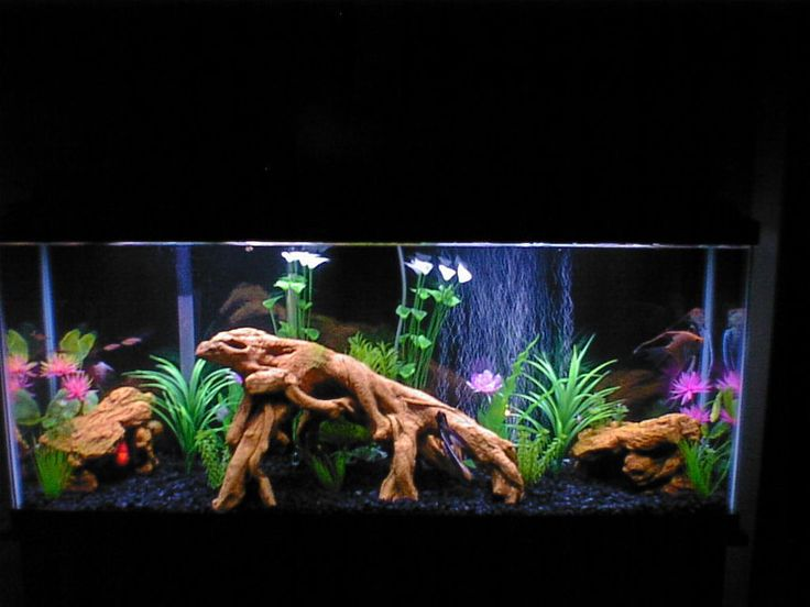 55 gallon fresh water tank animals pinterest for 55 gal fish tank