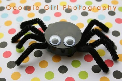 bottle top spider