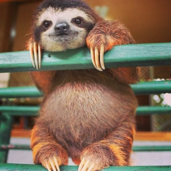 how-about-no-sloth