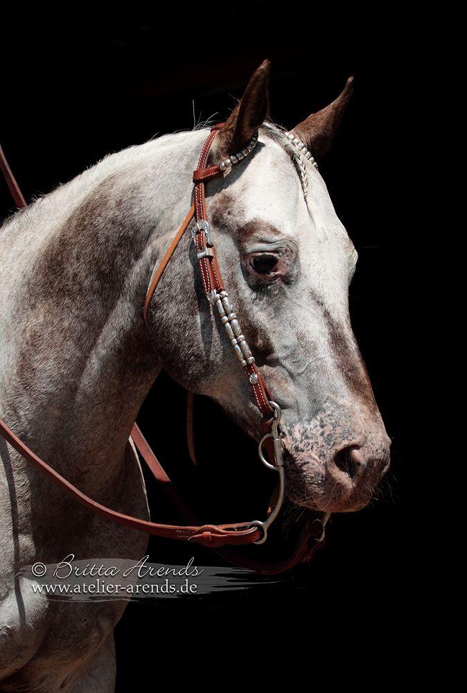 horse pon
