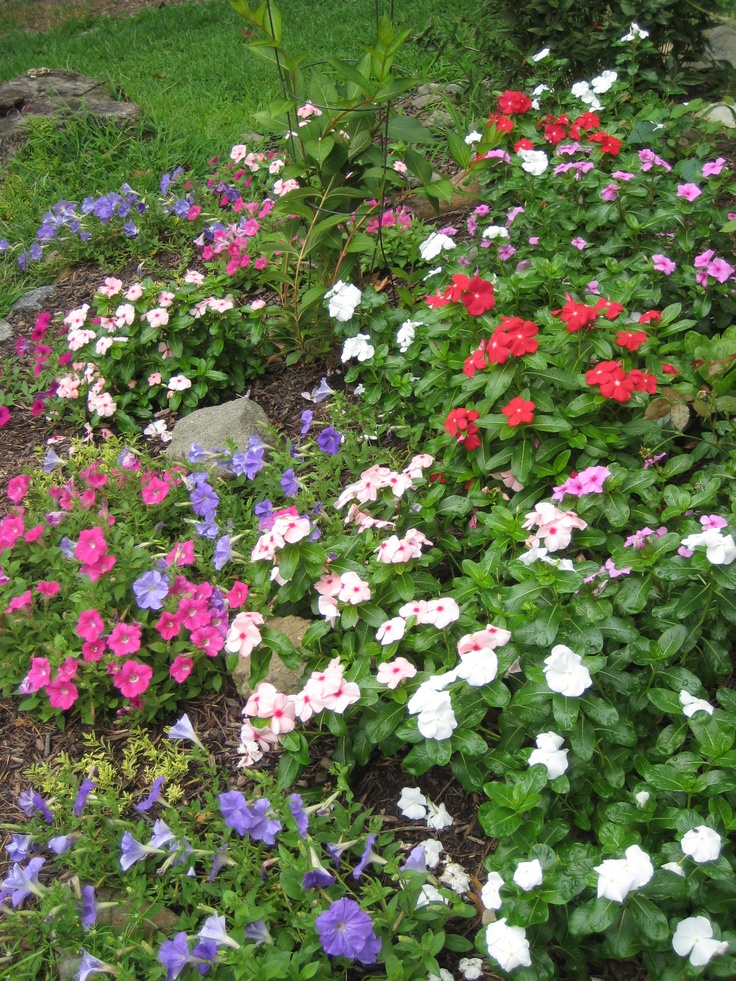 easy outdoor flowers to plant