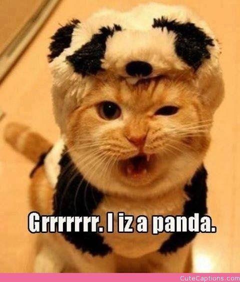 Cat… I Think Not. | Cute Captions | Animals!! | Pinterest