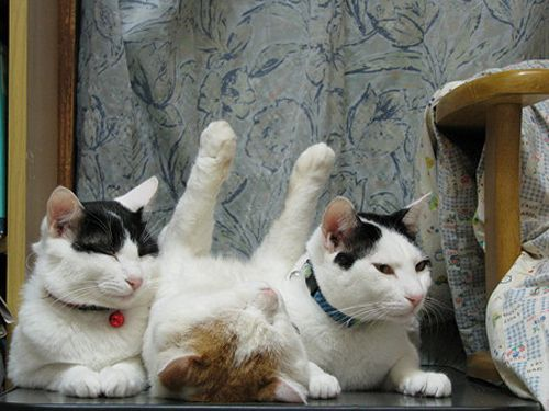 Nap bodyguards - Too cute!