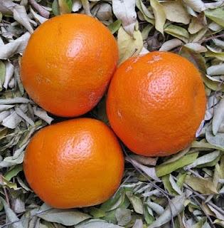 Orange And Oat Scone Recipe — Dishmaps