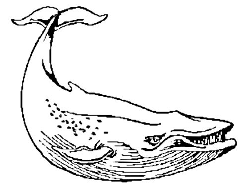 blue whale eating coloring pages - photo#25
