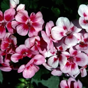 easy flowers to grow on allotment