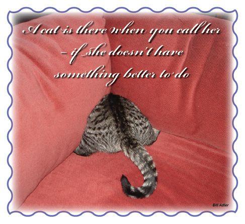cat lover quotes quotesgram