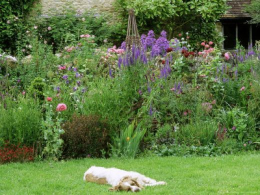 Dog friendly garden - Gardening for pets ...