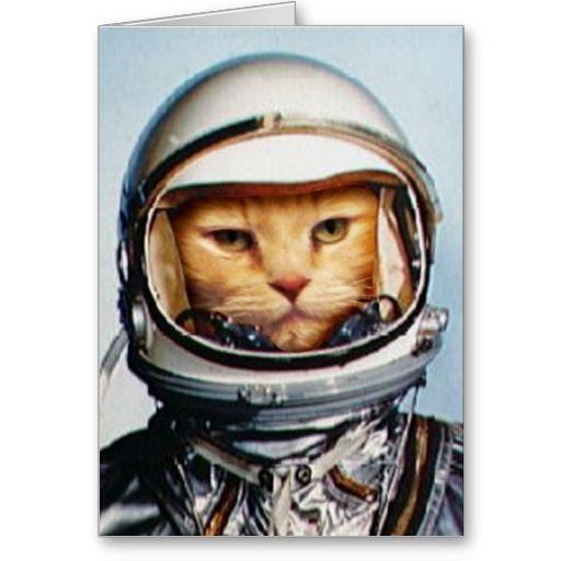 cat dressed as astronaut - photo #1