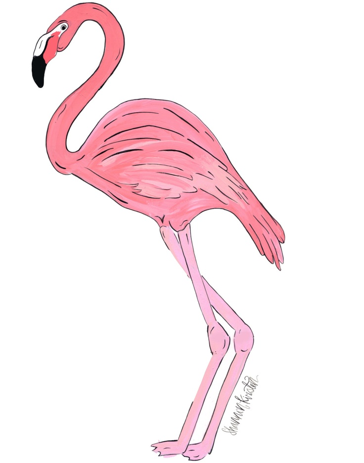 Pink Flamingo Illustra...