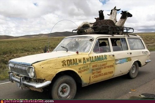 For All Your Llama Needs
