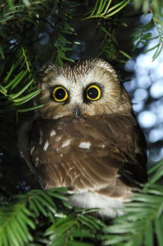 parkplatztreff owl donna sommer venus