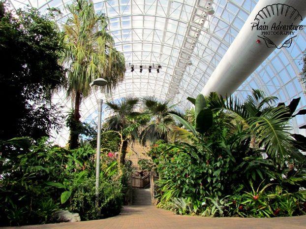 Indoor botanical gardens oklahoma city okc it 39 s cool for Indoor botanical gardens