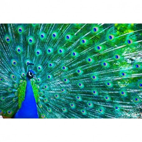 Peacock Wall Mural | Creative Art | Pinterest