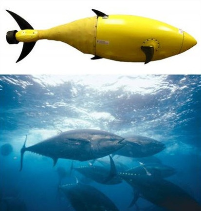 Homeland Security Funds Development of Robotic Tuna to Help Protect America