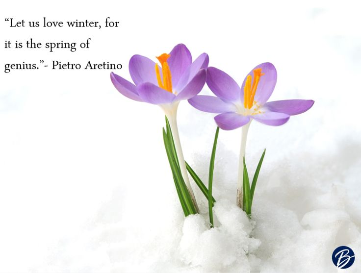 Quotes About Spring Flowers Gallery Flower Decoration Ideas Quotes About  Flowers And Spring Choice Image Flower