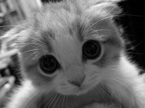 Irresistible   Animals   Pinterest